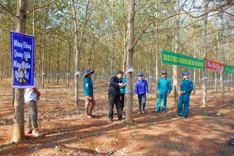 (Tiếng Việt) Cao su Mang Yang: Mục tiêu khai thác vượt trên 9% kế hoạch
